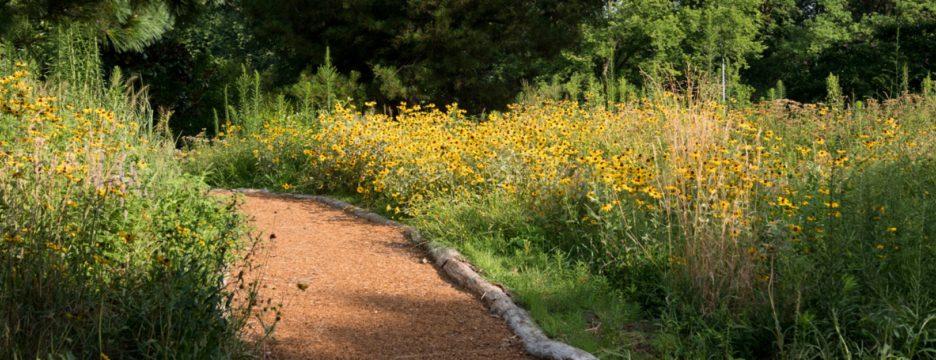 Dene Path