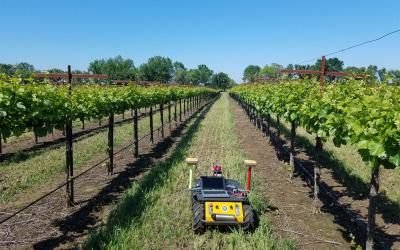 Husky UGV Helps Grape Growers Conserve Water