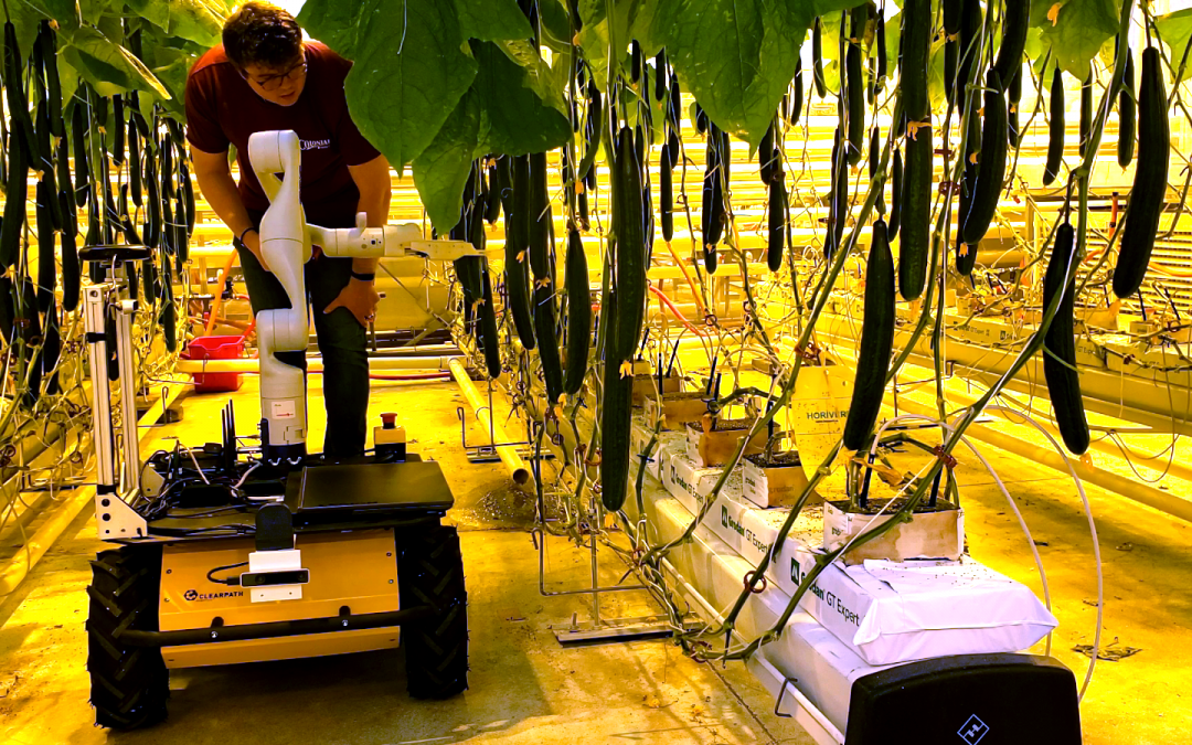 Vineland Converts Husky UGV into Cucumber Harvester to Boost Commercial Greenhouses