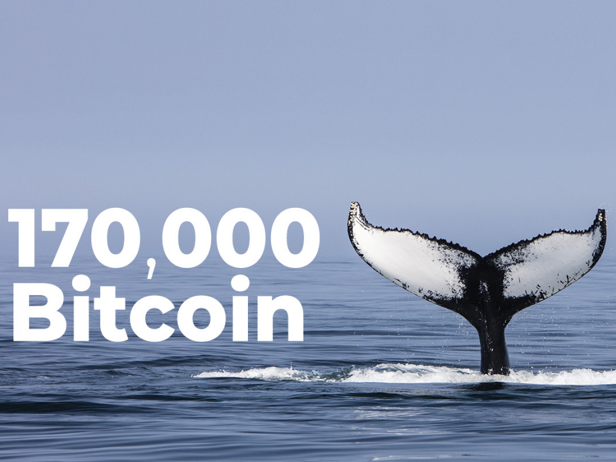 Whales Acquire 170,000 Bitcoin in Past 6 Weeks: Santiment Data