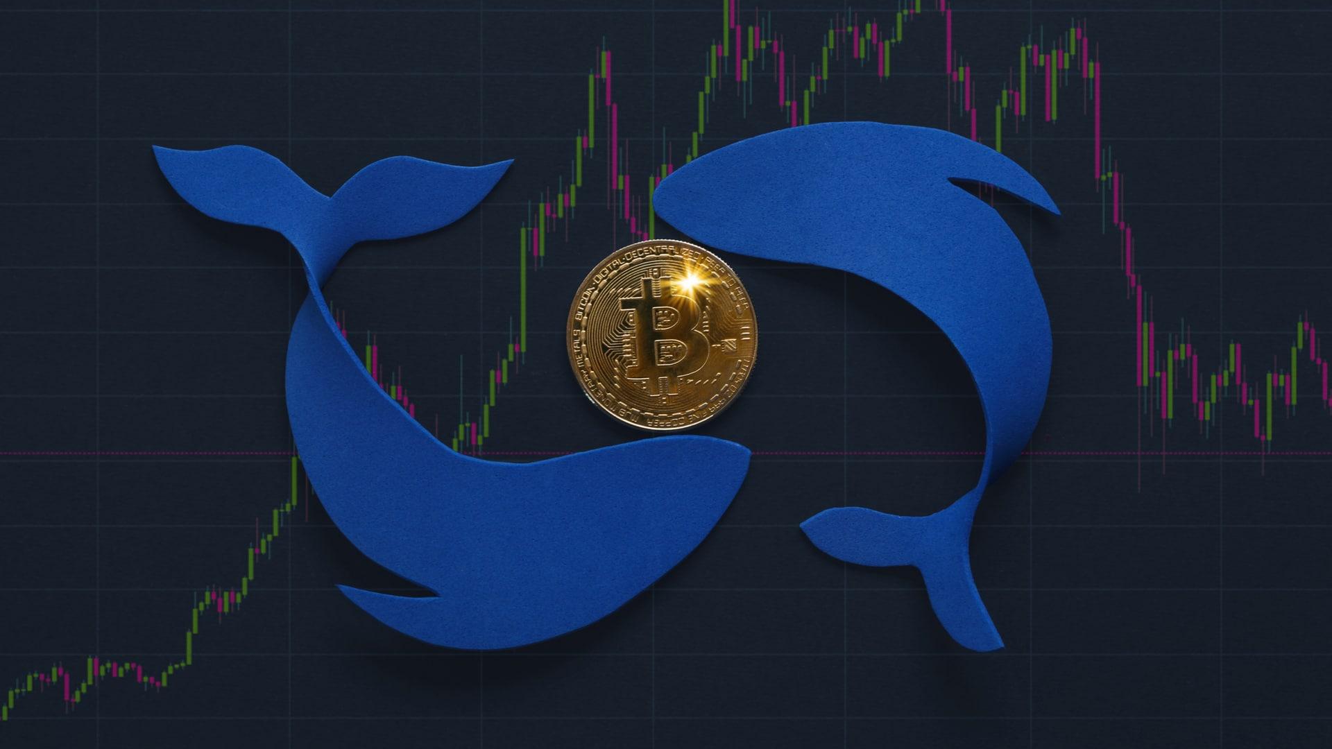 Baleias compraram 170 mil bitcoins nas últimas cinco semanas