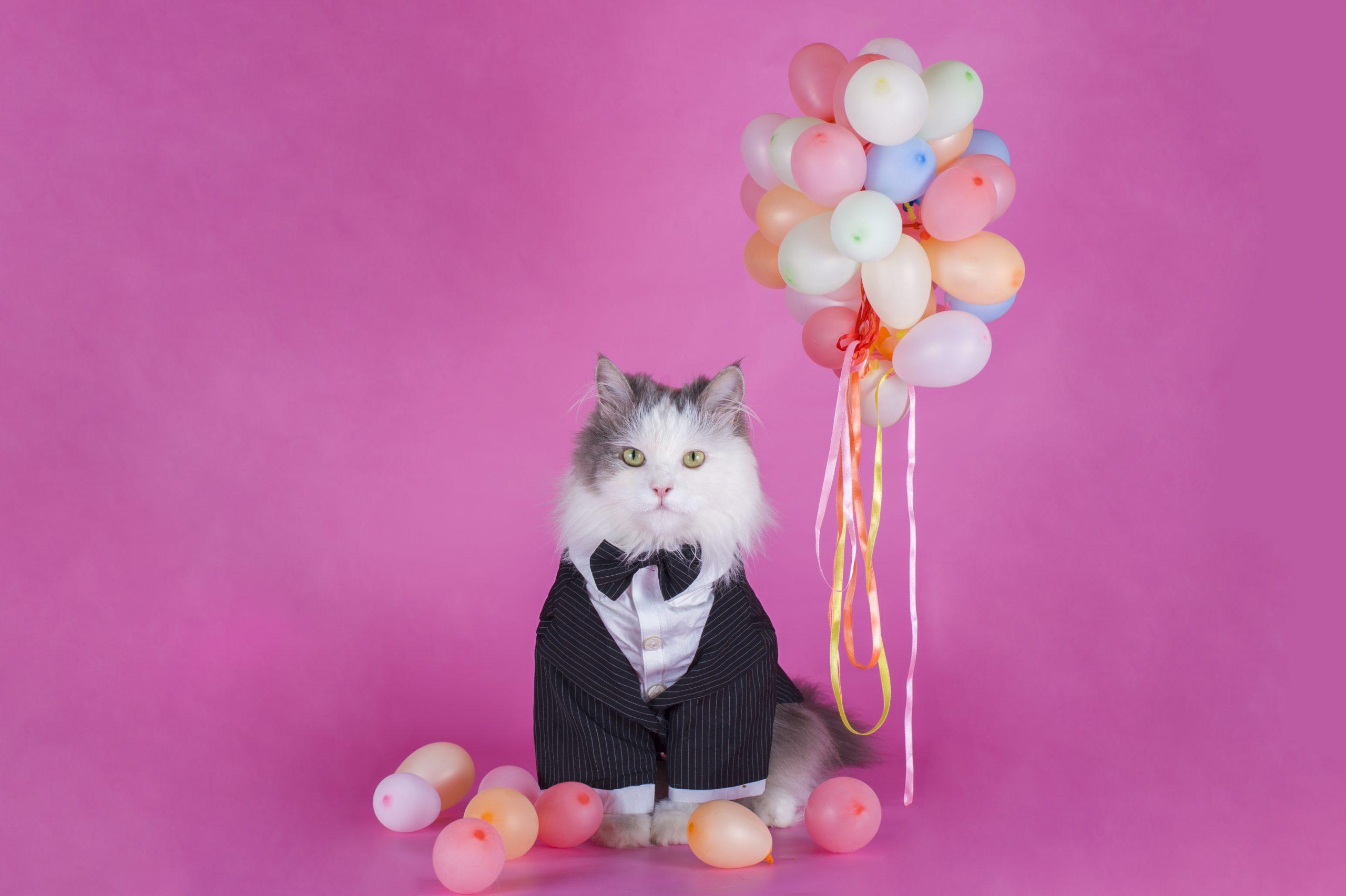 NFT-Hype um Stoner Cats: Cartoon-Kätzchen in 35 Minuten ausverkauft