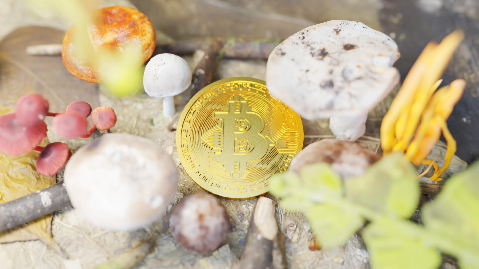 """Cảm xúc thị trường """"hồi sinh"""" sau 2 tháng """"đẫm máu"""", 100.000 Bitcoin được rút khỏi sàn chỉ 3 ngày"""