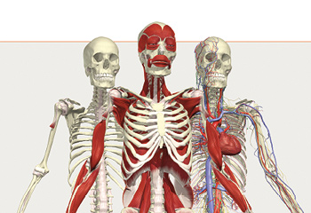 Premier Human Anatomy Package