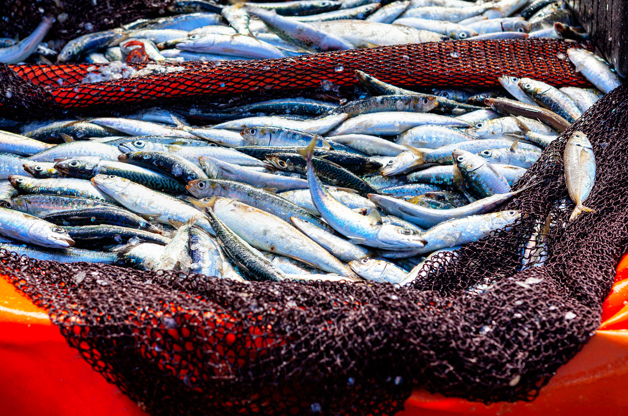 Os casos da síndrome de Haff estão associados ao consumo de peixes de água doce (Fonte: iStock).