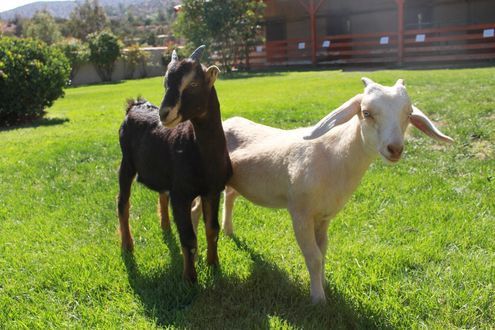 Paul and Harvey at Farm Sanctuary