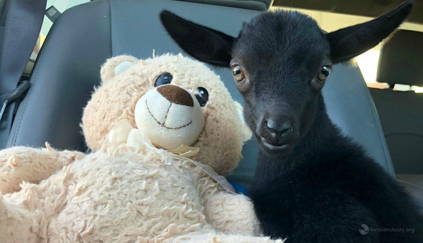 Rufio and Teddy Bear