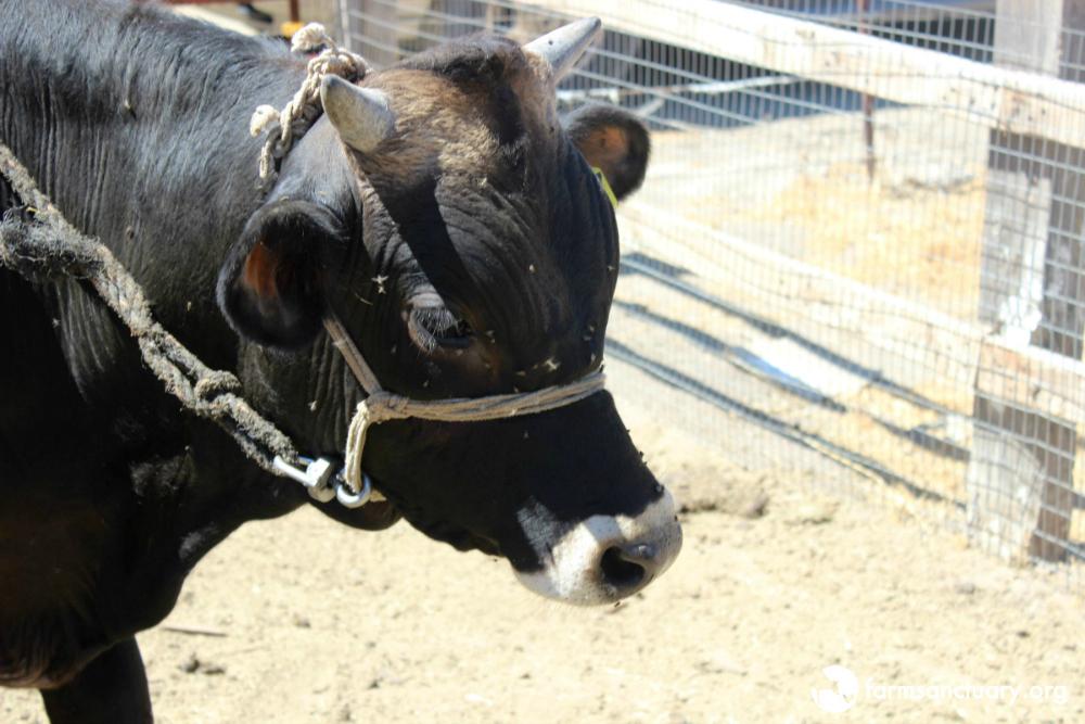 Dale steer