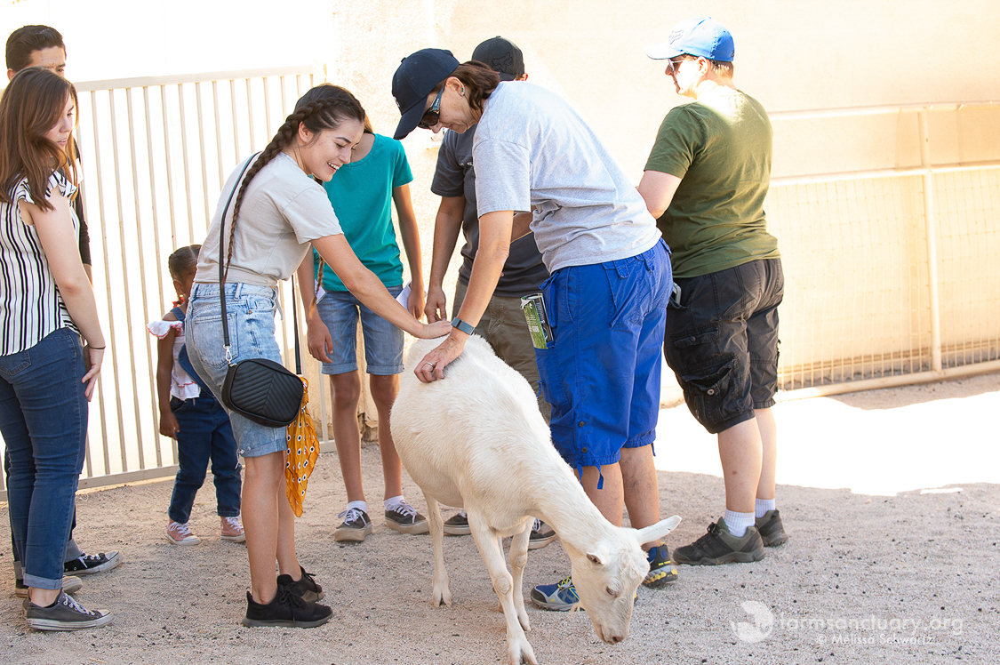 Guests with Alice Goat at Farm Sanctuary