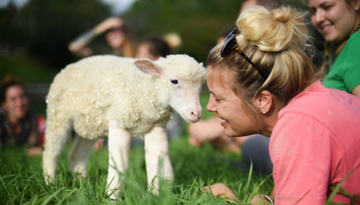 Sophie lamb