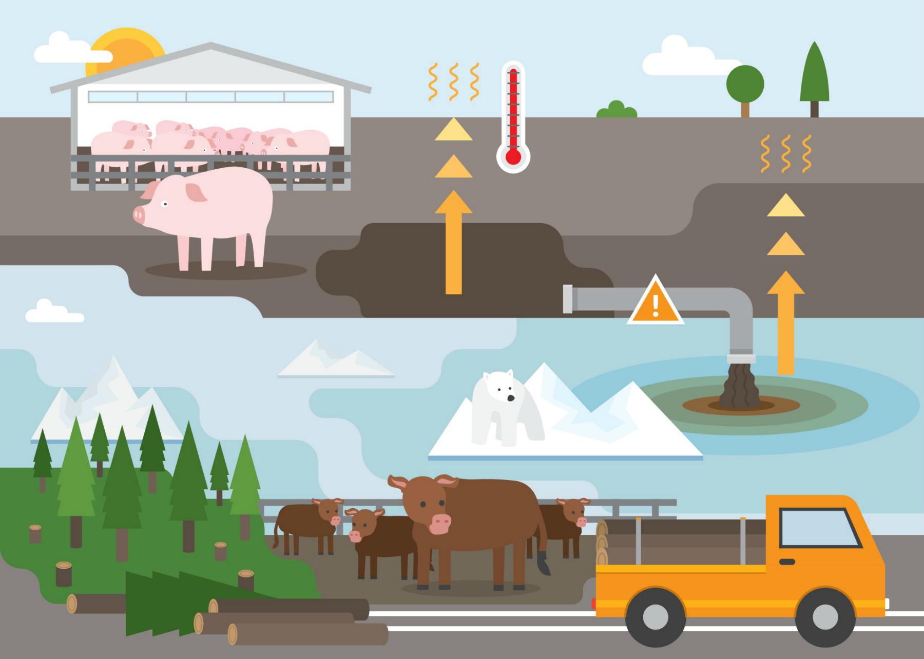 Vertical explainer photo 2 - Environmental Curriculum Infographic