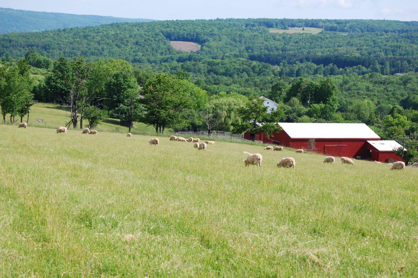 FSNY Sheep Pasture