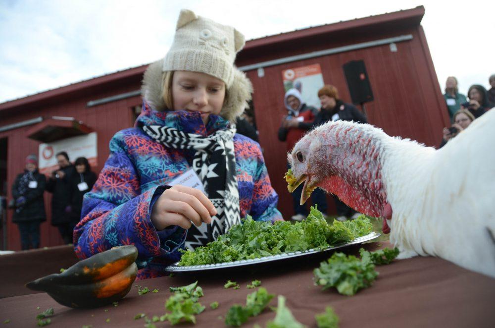 Shannon turkey eating salad