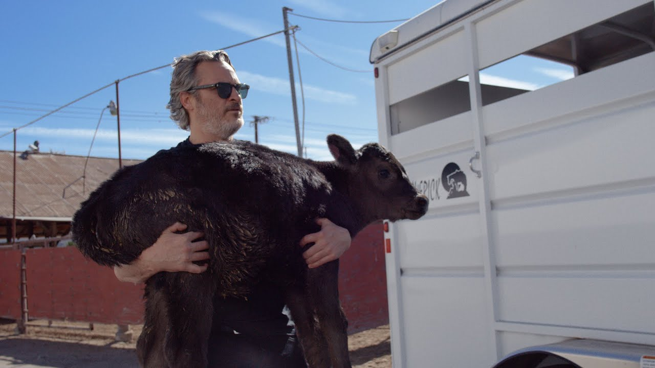 Joaquin Phoenix carries calf out of slaughterhouse