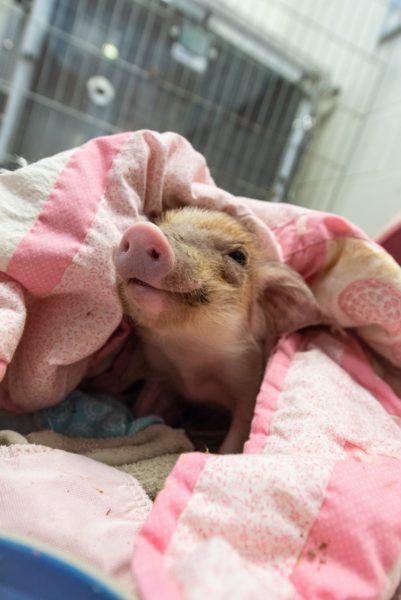 George snuggled in a blanket