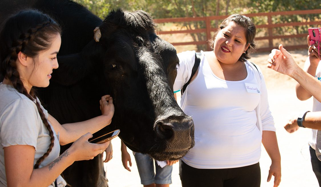 Vertical explainer photo 3 - Bruno steer with guests at Farm Sanctuary, credit Melissa Schwartz