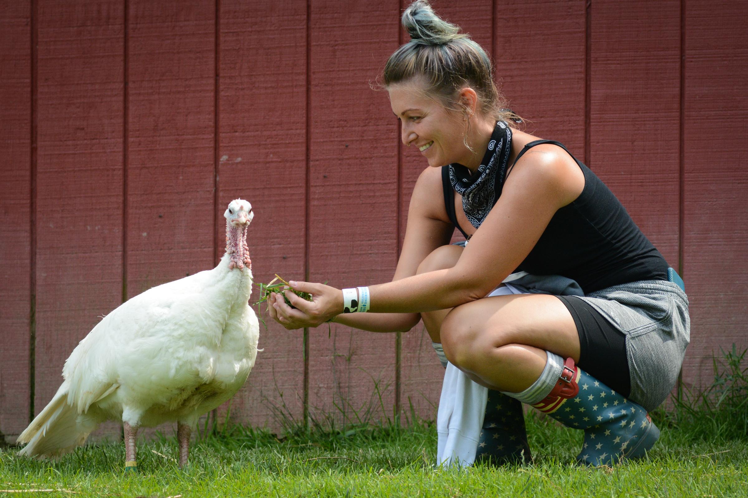 Guest feeding turkeys at Farm Sanctuary
