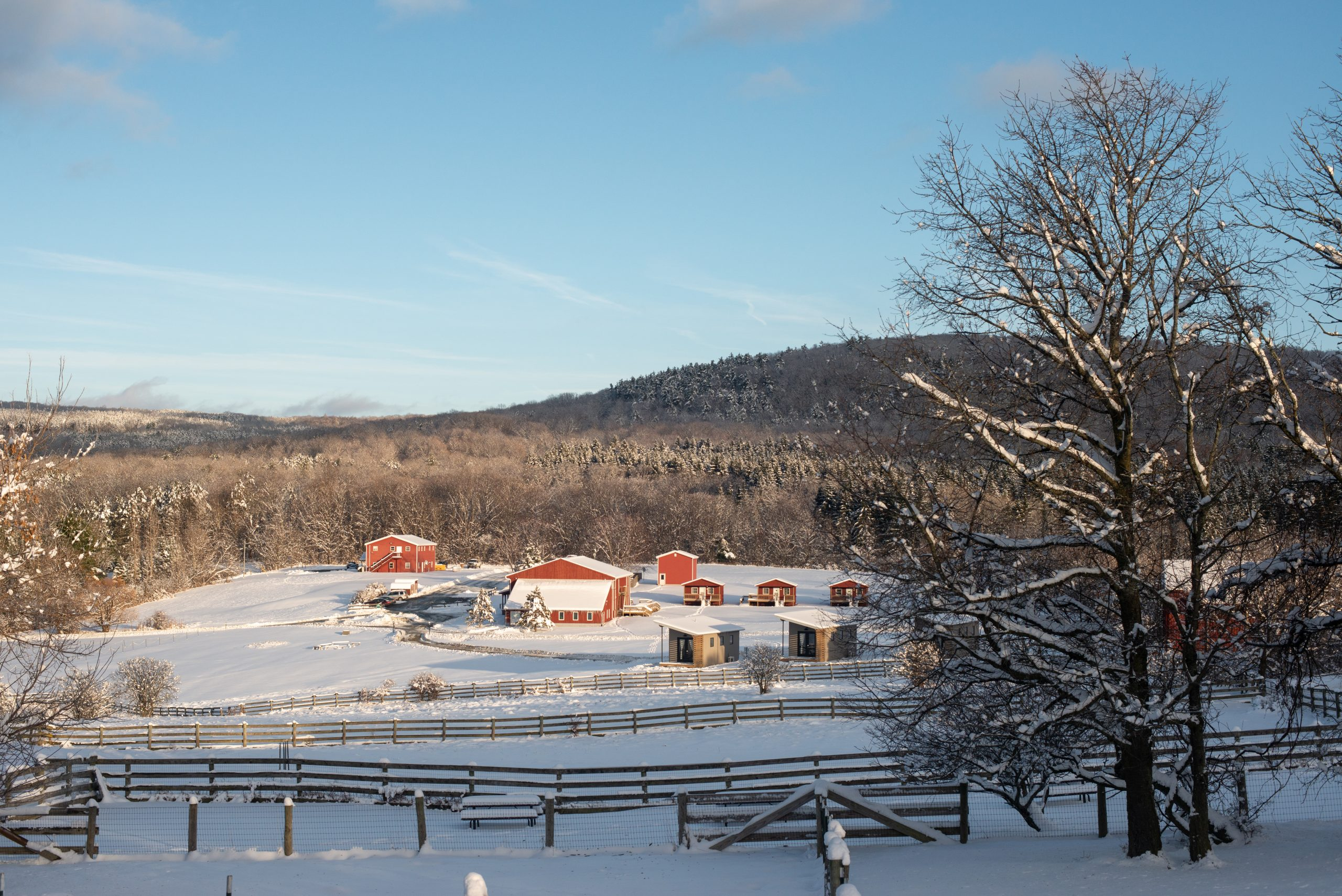 Snowy landscape at Farm Sanctuary