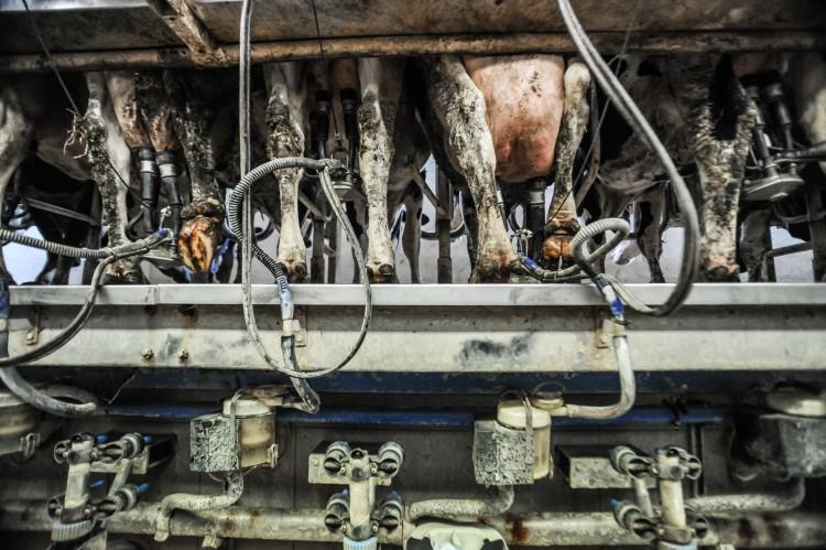 The milking machine