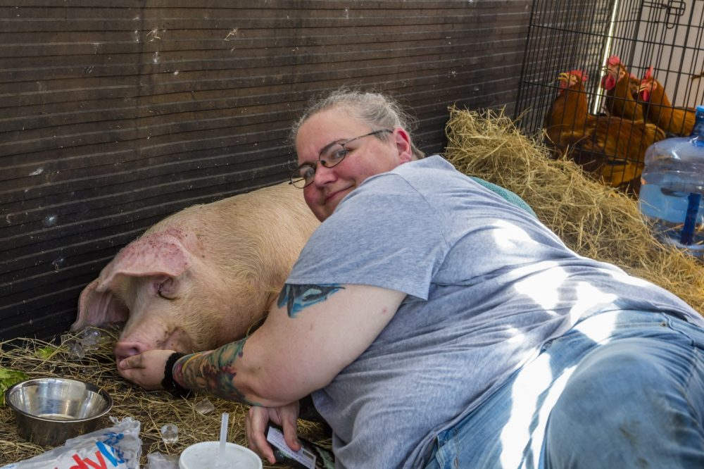 Rescue team member with pig