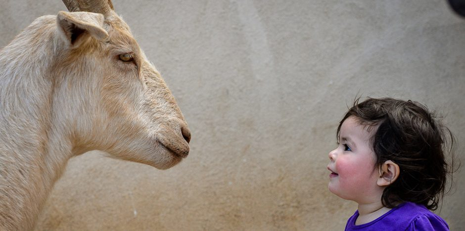 Child with goat at Farm Sanctuary, photo credit Michael Freund