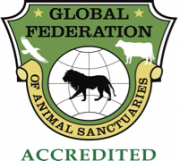 Global Federation Accredited