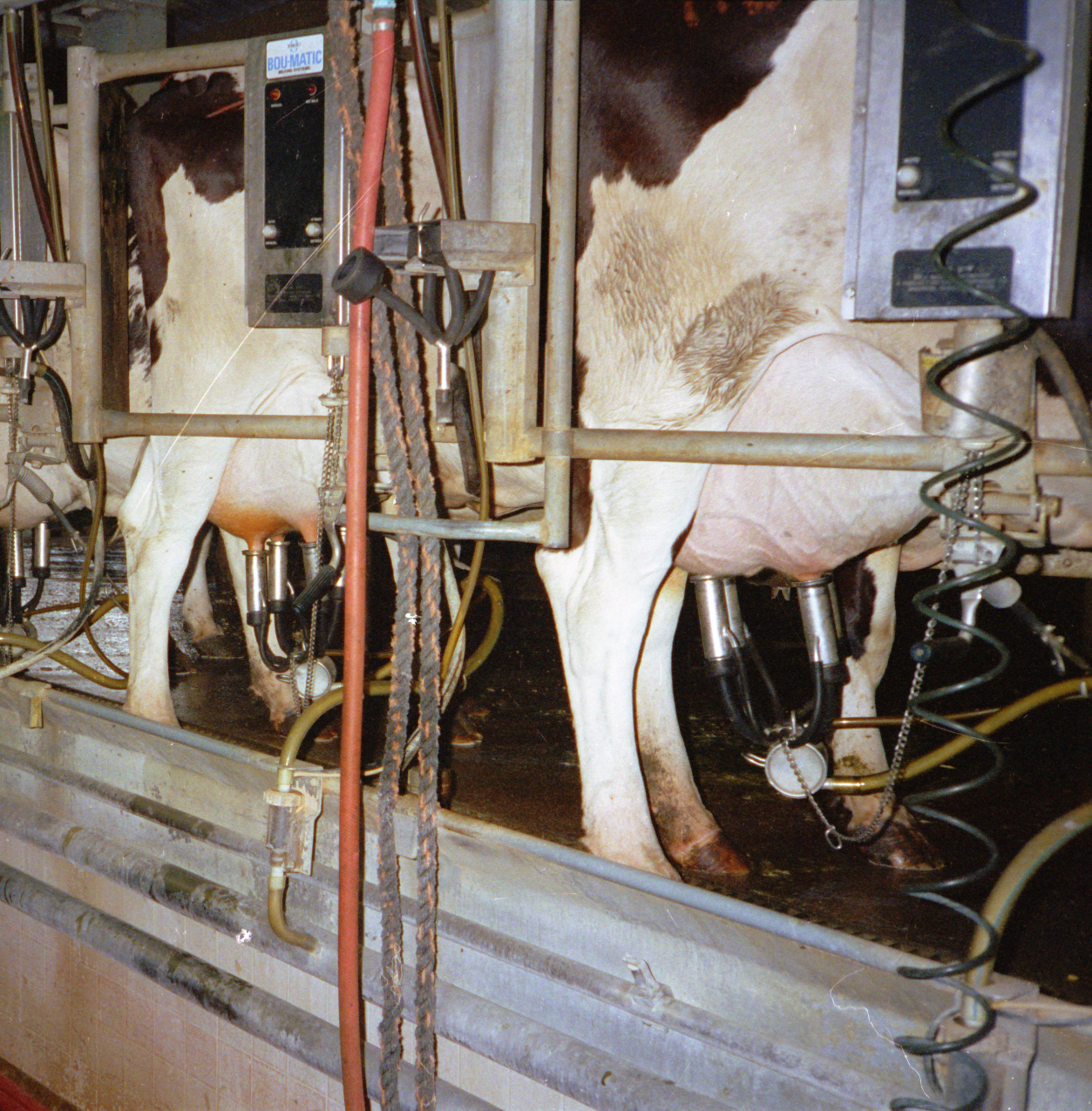 Milking Stations
