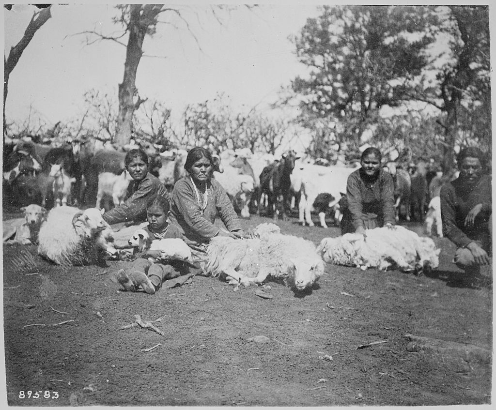 Navajo women shearing sheep