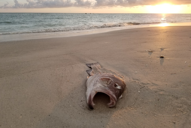 Vertical explainer photo 3 - Dead fish at sunset