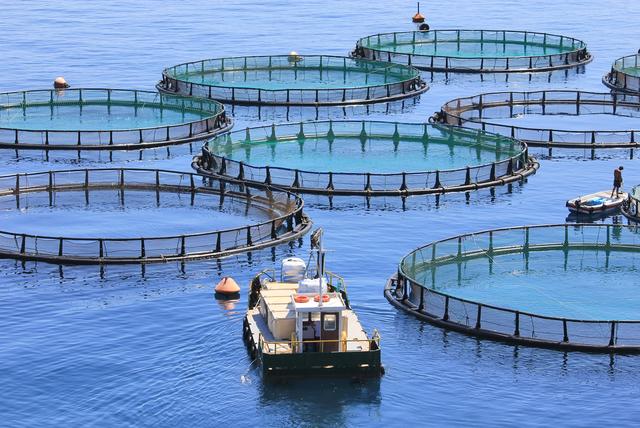 Vertical explainer photo 2 - Fish Farm