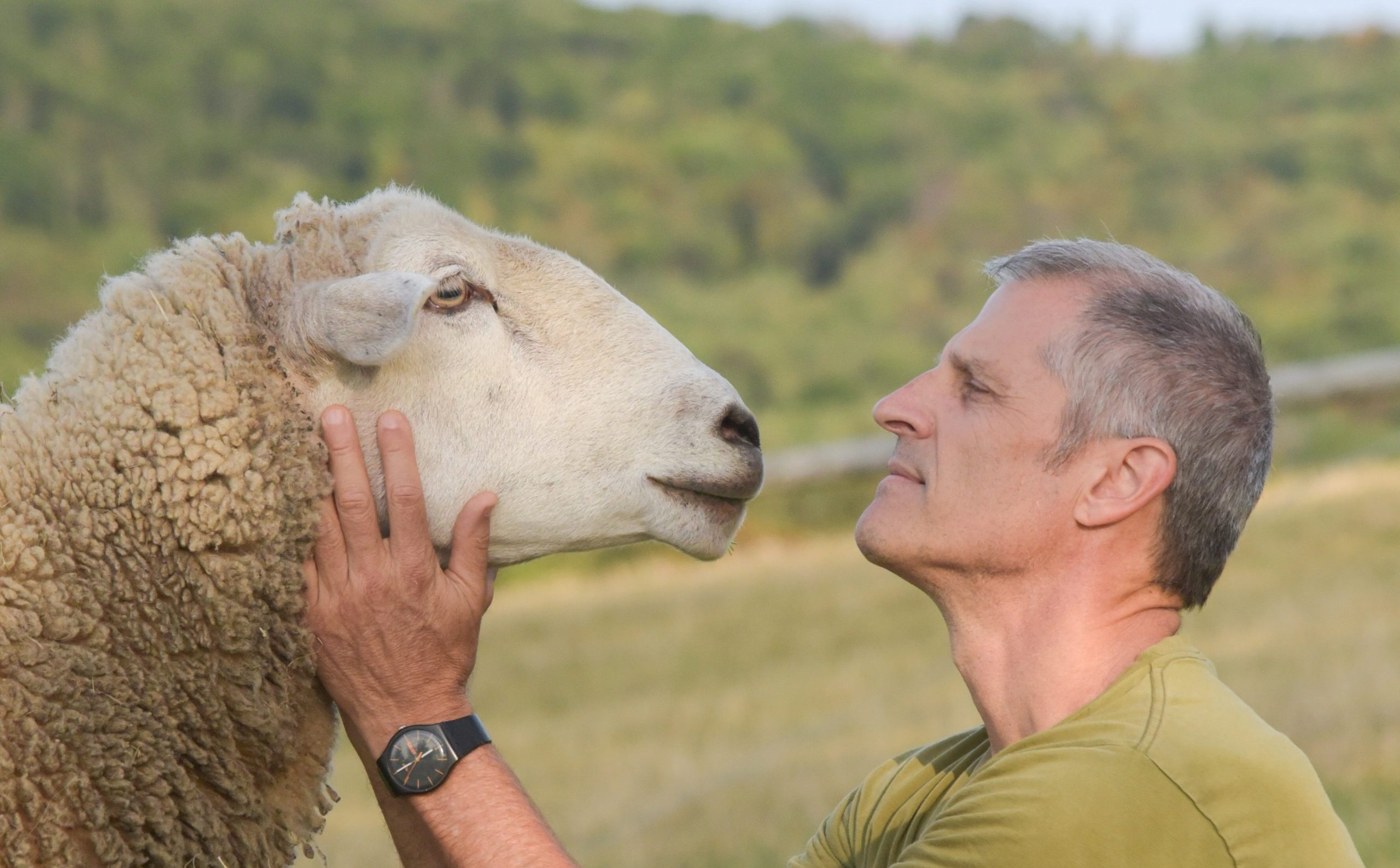 Gene Baur with Francis sheep