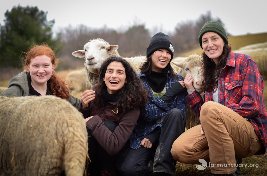 Interns at Farm Sanctuary