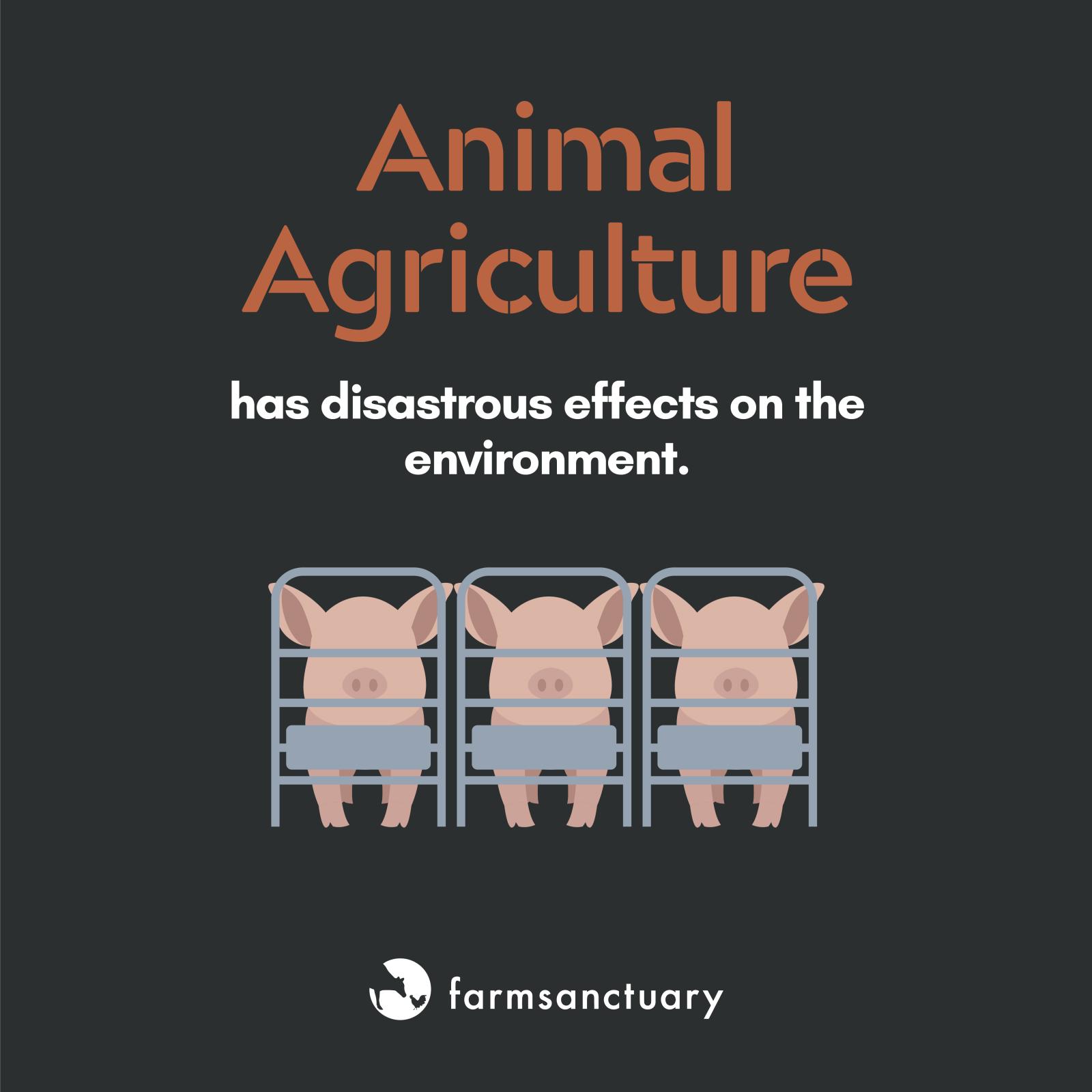 Farm Sanctuary Earth Day infographic