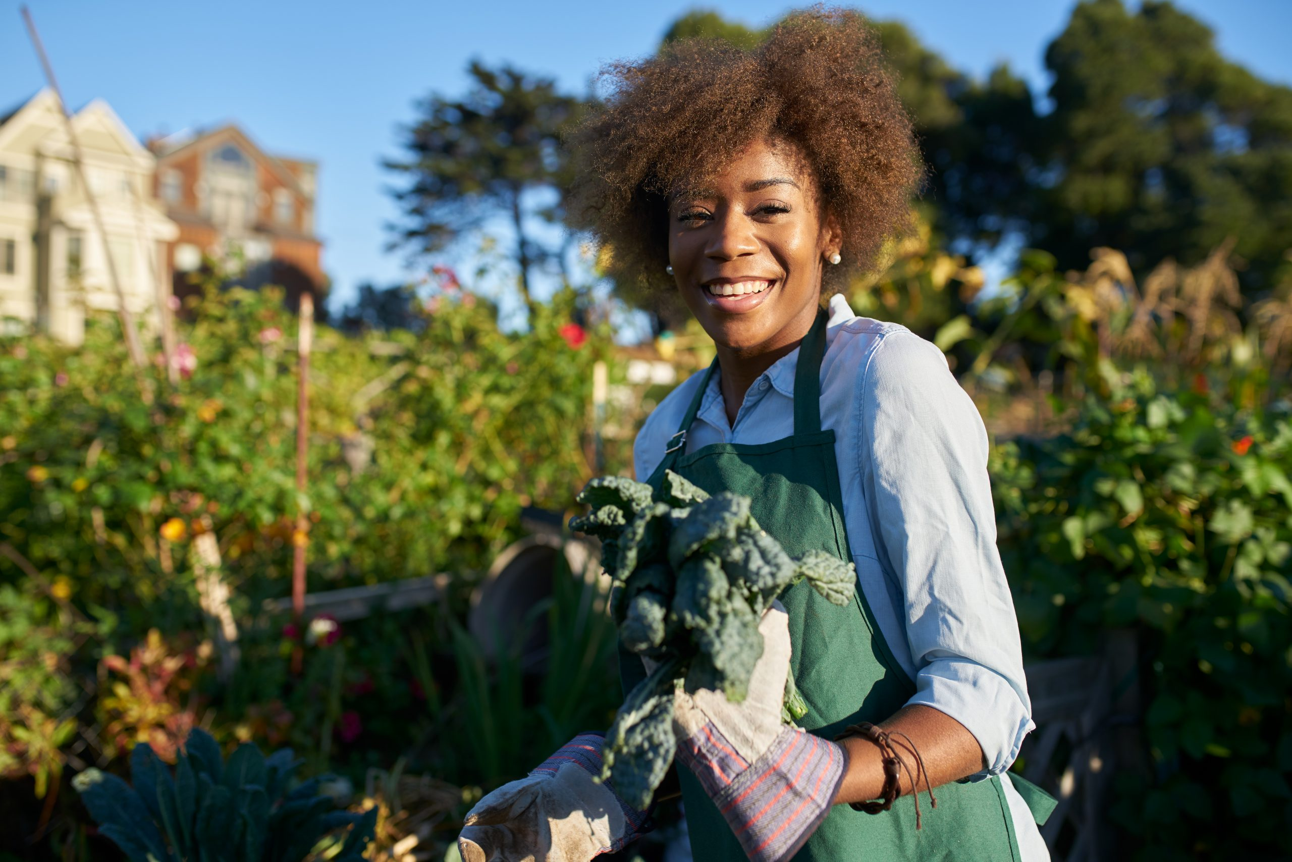 Woman holding freshly picked kale at urban community garden.