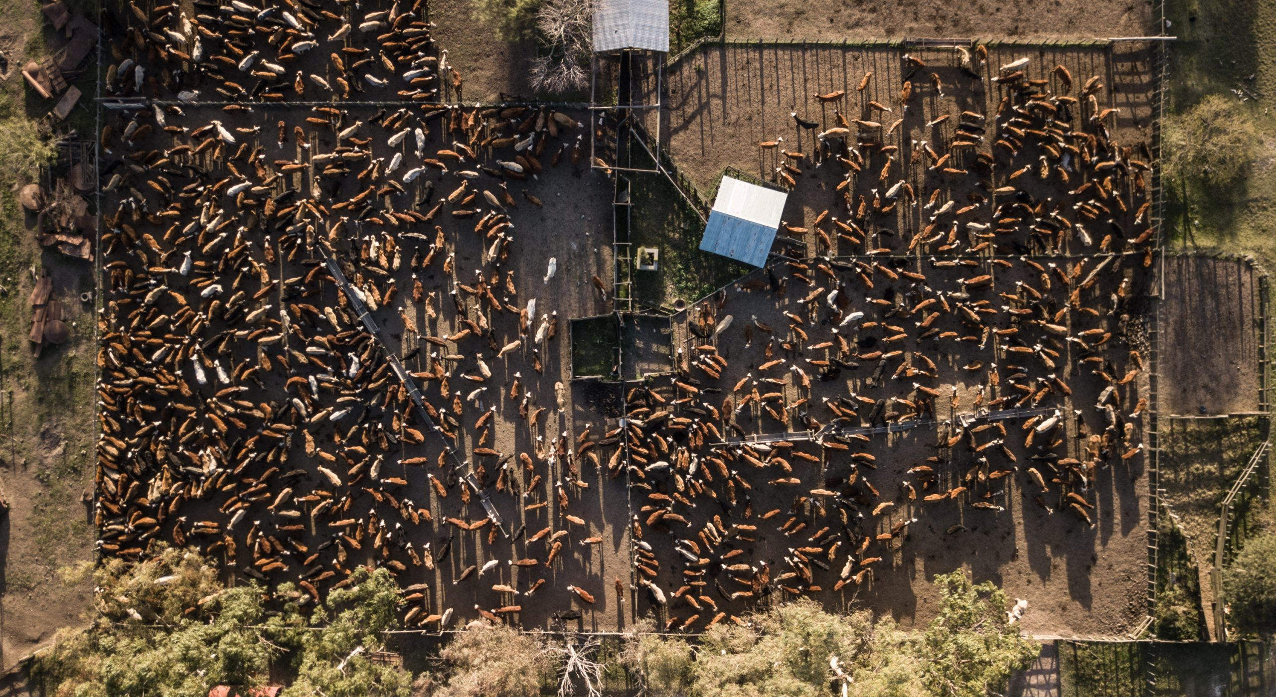 Aerial view of a cattle feedlot.