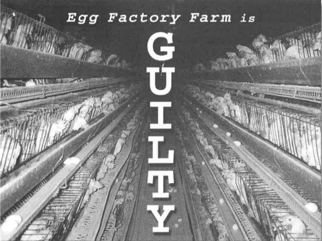 Egg factory farm is guilty written over a photo from ISE farm.