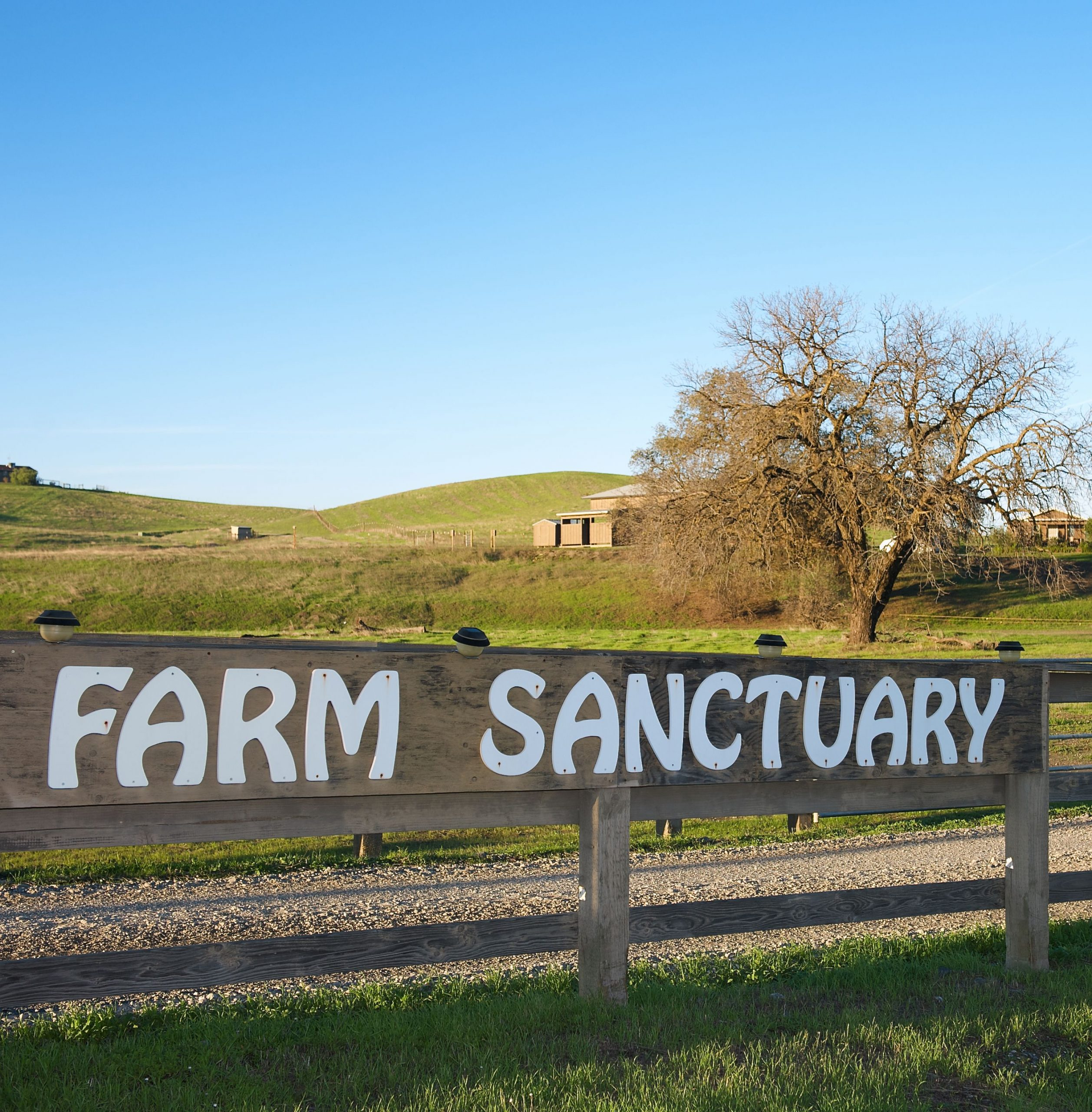 Farm Sanctuary sign in front of Orland location.