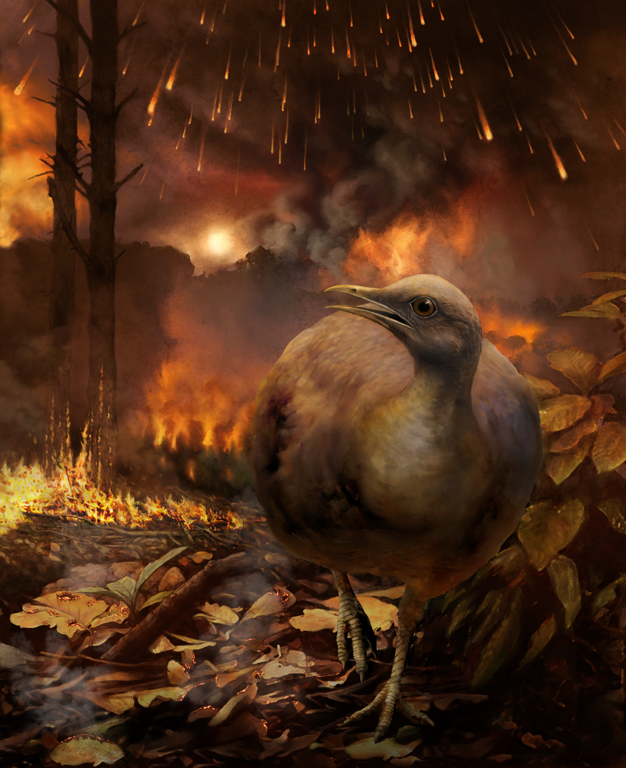 Illustration of a ground-dwelling bird surviving the asteroid that wiped out the dinosaurs.