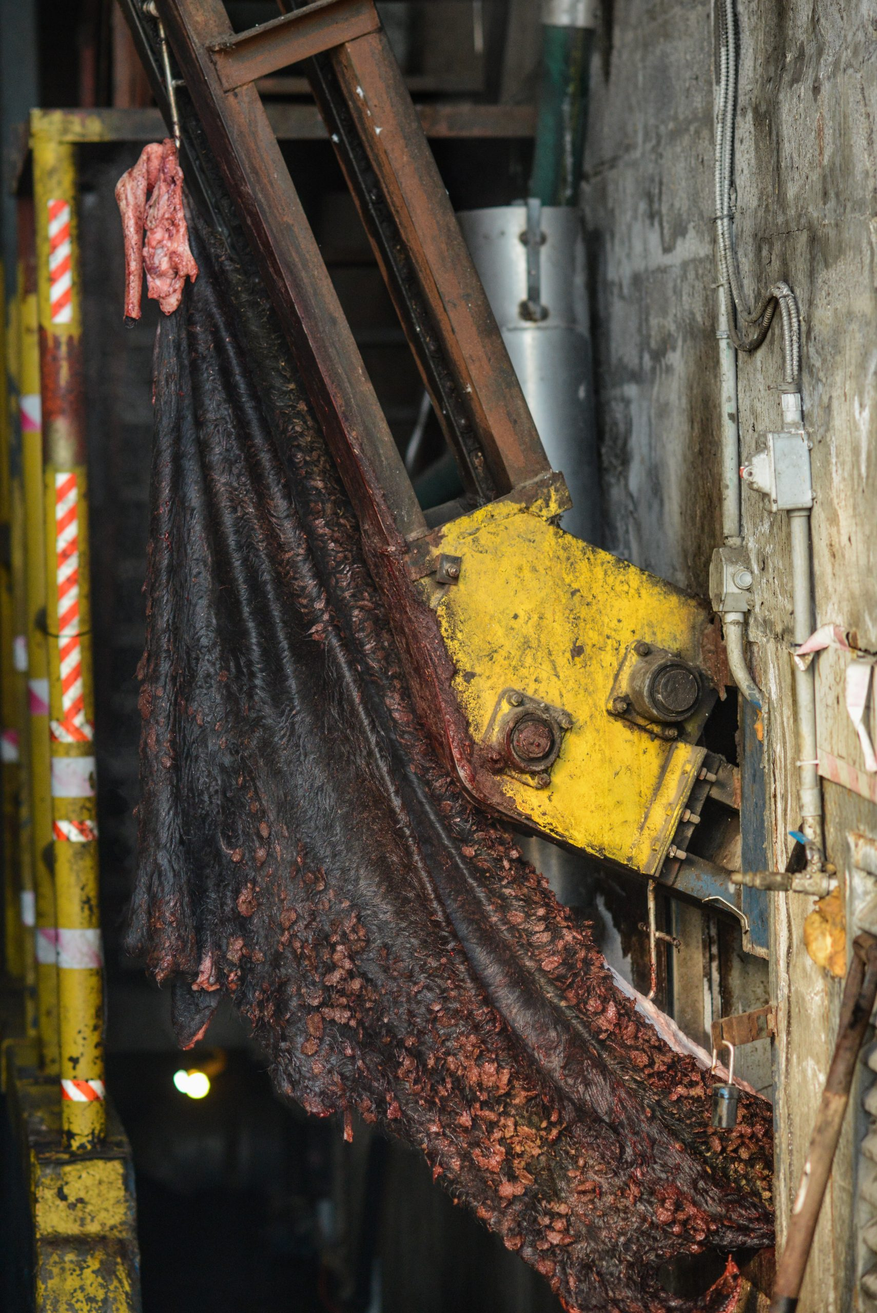 Vertical explainer photo 2 - Recently Slaughtered Steaming Animal Skin Being Loaded Onto A Truck