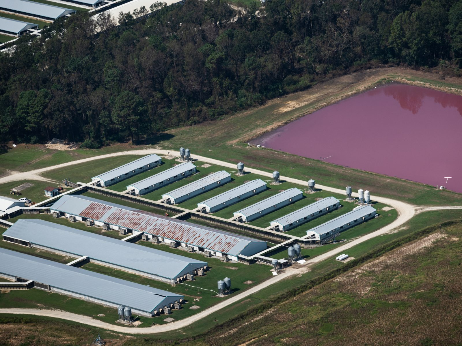 Aerial view of CAFO barns and manure lagoons in North Carolina