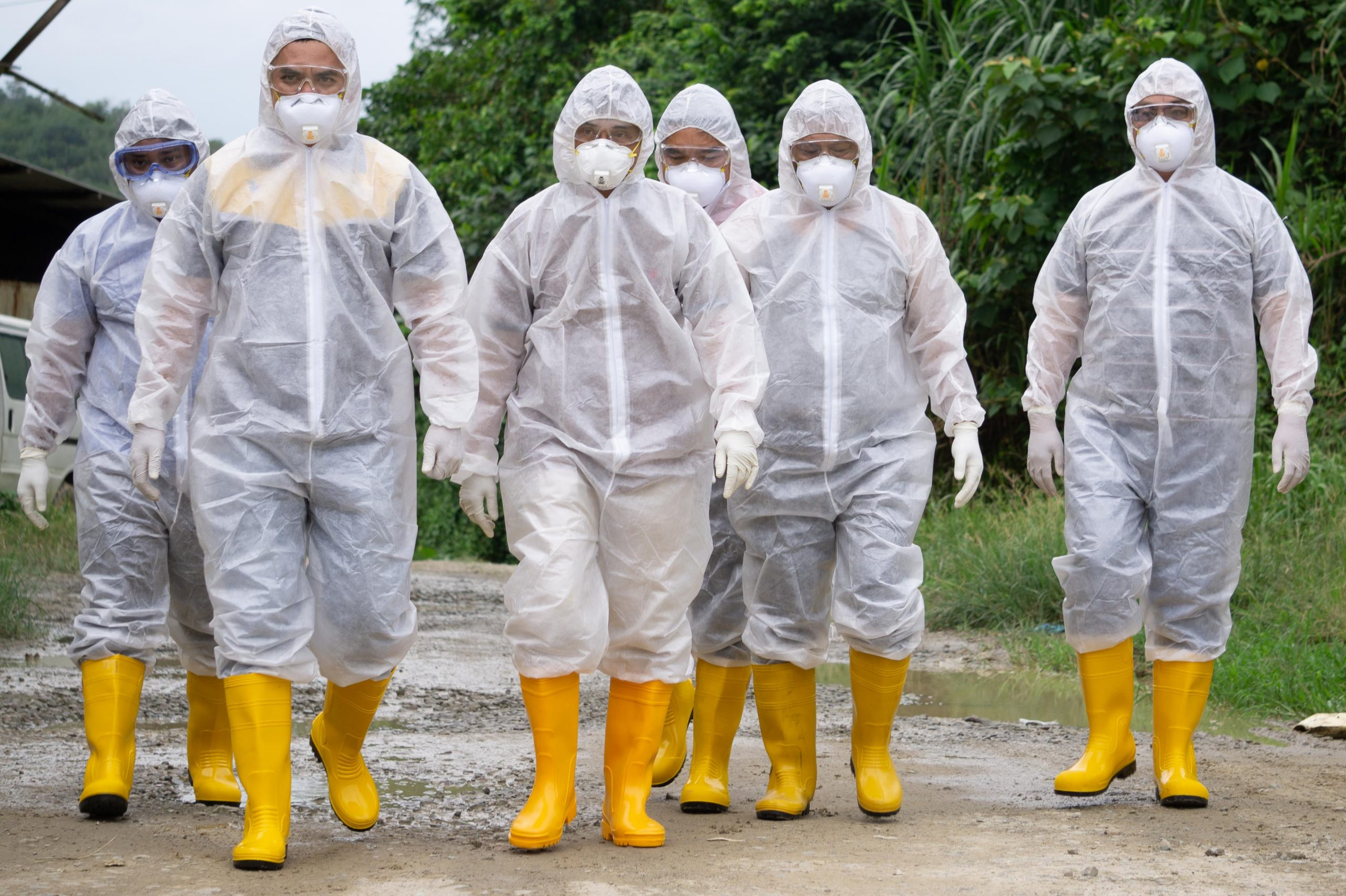 Vertical explainer photo 1 - Veterinary workers wearing personal protection equipment (PPE) during avian influenza (bird flu) checking on chicken barn in Malaysia.