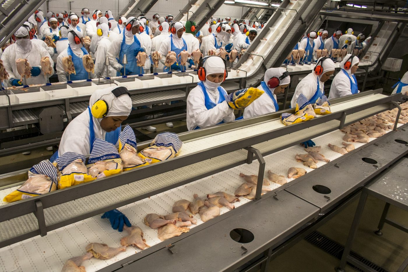 Vertical explainer photo 1 - Processing factory chicken