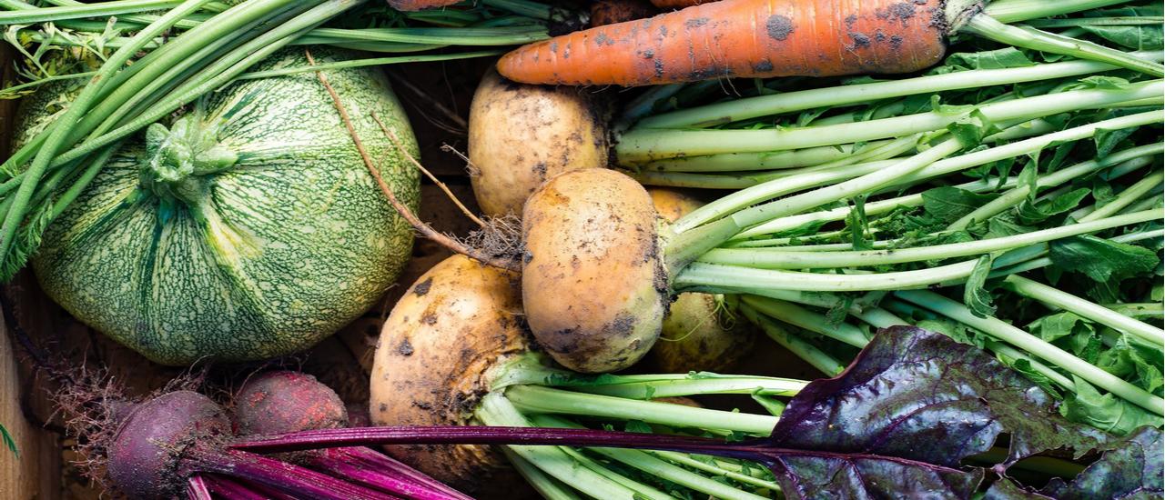 Closeup of freshly harvested vegetables
