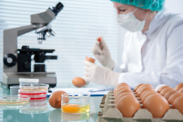 Vertical explainer photo 3 - Veterinarian injects vaccine into chicken to prevent poultry diseases