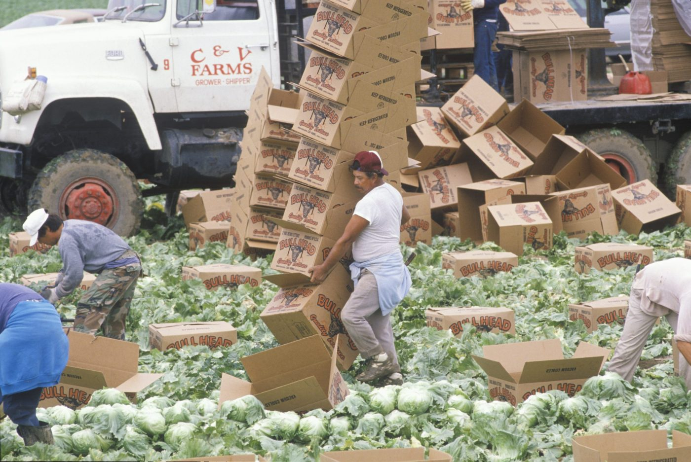 Migrant farm workers harvest and box lettuce in San Joaquin Valley, CA