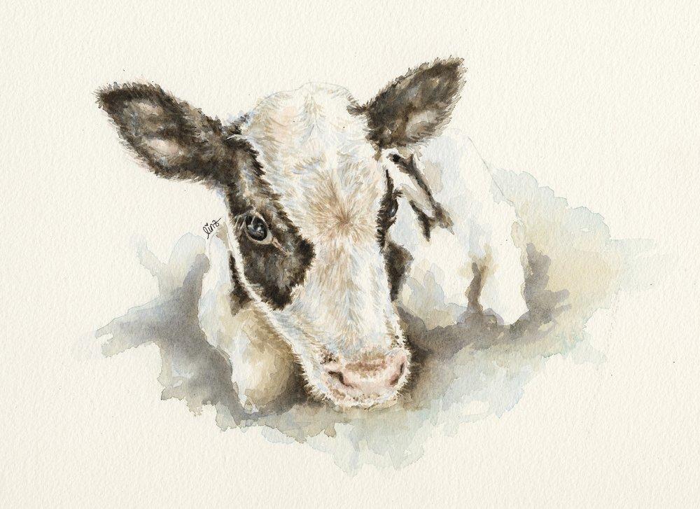 Vertical explainer photo 3 - Daisy from SASHA Farm Animal Sanctuary / Artist: Lindsay Leigh Lewis