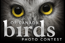 Birds of Canada Photo Contest