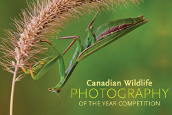 Canadian Geographic Photo Club Contests