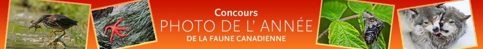 Concours Photos de l'année de la faune canadienne
