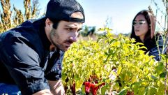 Jon Eisen of Between the Bread inspecting some peppers.